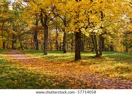 Scenic view of golden leaves on trees in park, autumn scene