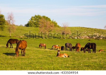 Scenic view of horses out to pasture on a hilly countryside as the sun shines up above - stock photo