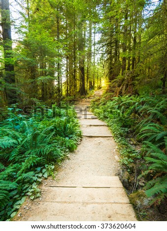 scenic view of path way in the forest with sun light. - stock photo