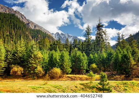 Scenic view of primeval forest among mountains in Jiuzhaigou nature reserve (Jiuzhai Valley National Park), China. Snow-capped mountains in background. Amazing landscape with snowy peaks.