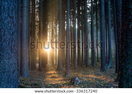 Scenic view of rays of sun beaming through the silhouette trees. - stock photo