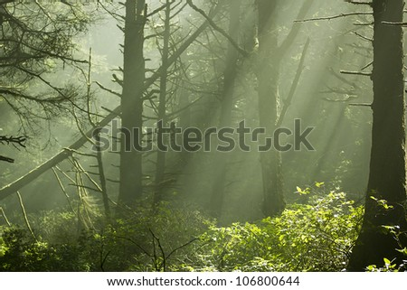 Scenic view of rays of sun beaming through the trees.
