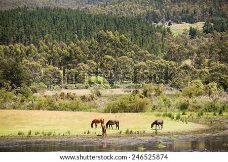 Scenic view of rural farmland in southern Tasmania - stock photo