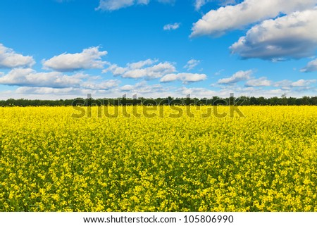 Scenic view of rural field with rape flowers - stock photo