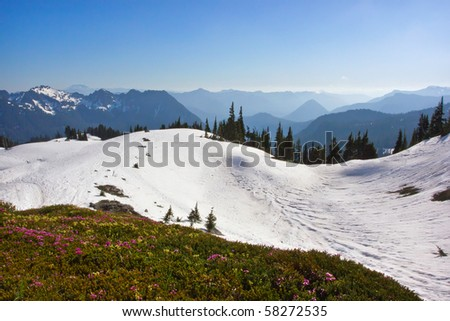 scenic view of snow covered mountains and wildflowers in Mount Rainier National Park, Washington - stock photo