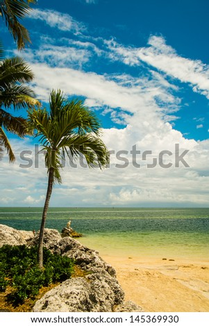 Scenic view of the Florida Keys with coconut palm trees along the bay. - stock photo