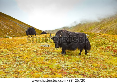 Scenic view of the Himalayas mountains with yak - stock photo