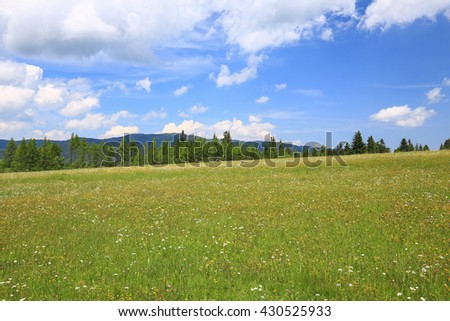 Scenic view of the meadow