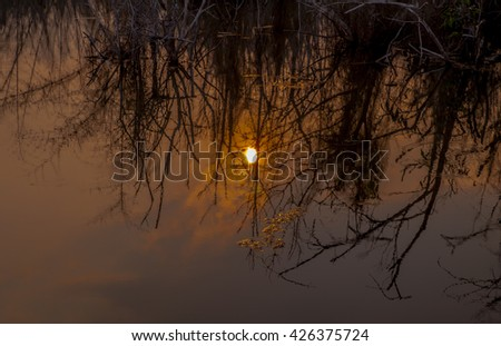 Scenic view of tree in serene water under sunset sky with clouds - stock photo