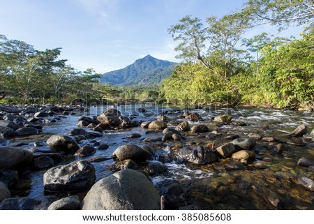 Scenic view of tropical jungle near the Sorinsim river, Kudat, Malaysia Borneo. - stock photo