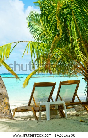 Scenic view on maldivian beach with palms and turquoise ocean