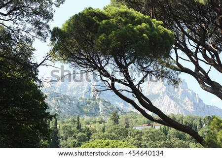 Scenic view with stone pine tree and mountains in the park of Vorontsov Palace in Crimea - stock photo