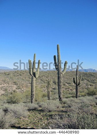 Scenic views of the Sonoran Desert and the Superstition Mountains abound from the Fountain Hills area of Arizona.  Shrubs of all kinds are prevalent, along with Saguaro cacti such as you see here. - stock photo