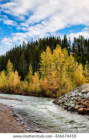 Scenic vista of yellow aspens lining a stream in autumn