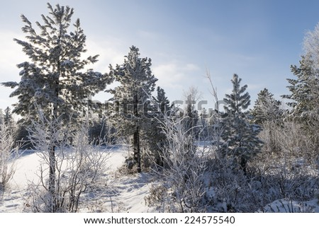 Scenic winter forest landscape in the north of Russia - stock photo