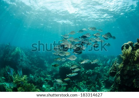 Scenics from the coral reefs of the mesoamerican barrier. Mayan Riviera, Mexican Caribbean.