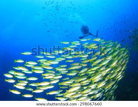 School of fish and scuba diver on underwater reef  - stock photo