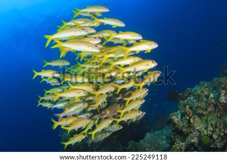 School of fish on coral reef in ocean - stock photo