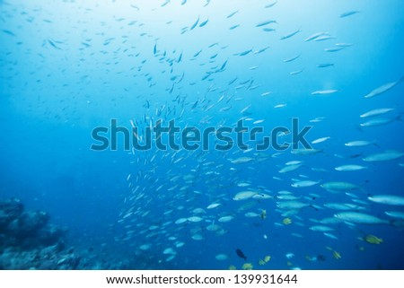 school of fish under the sea - stock photo