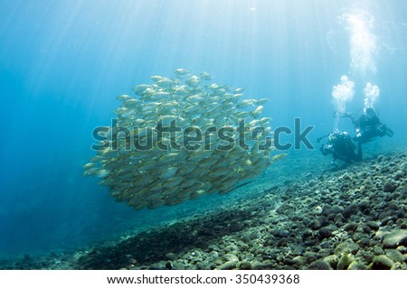 School of fish underwater, Tulamben, Bali, Indonesia. - stock photo