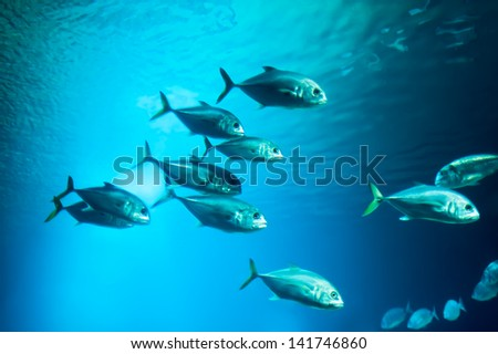 School of fishes underwater. Photo taken in aquarium of City of Arts and Sciences, Valencia. - stock photo