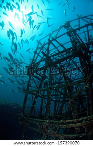School of jackfish on artificial reef in Mabul, kapalai, Malaysia