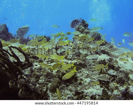 School of mix fish in a coral reef - stock photo