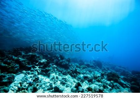 school of scad fish in Dimakya island, Palawan, Philippines. - stock photo