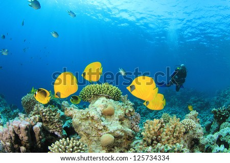 School of Tropical Fish (Masked Butterflyfish) and Scuba Diver - stock photo