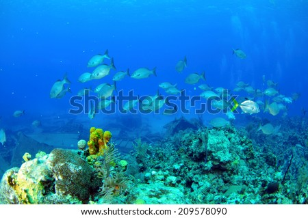 Schooling fish over the reef, Grand Cayman - stock photo