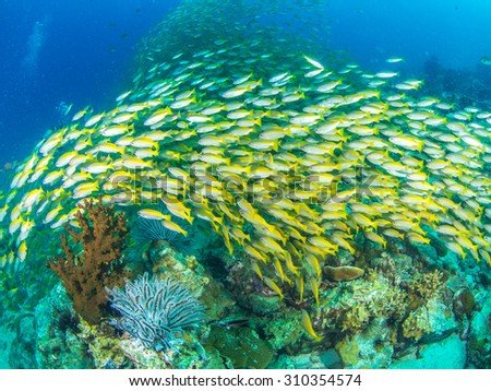Schooling of Fish - stock photo