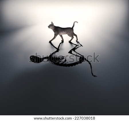 Schrodinger's cat - dead and alive - stock photo