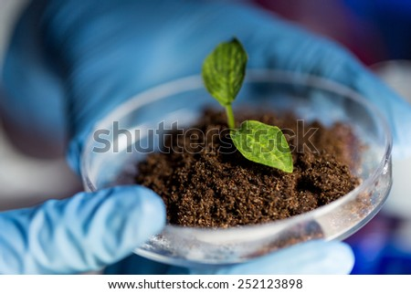 science, biology, ecology, research and people concept - close up of scientist hands holding petri dish with plant and soil sample in bio laboratory - stock photo