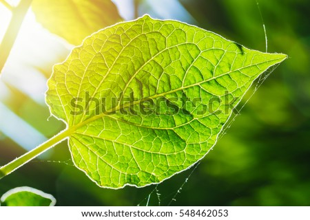 chlorophyll stock images, royalty-free images & vectors | shutterstock, Skeleton