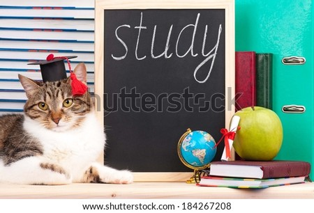 Scientific adult cat with educational accessories concept - stock photo