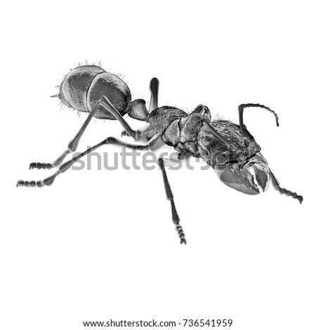Scientific Illustration Bullet Ant 3 D Digital Stock Illustration ...