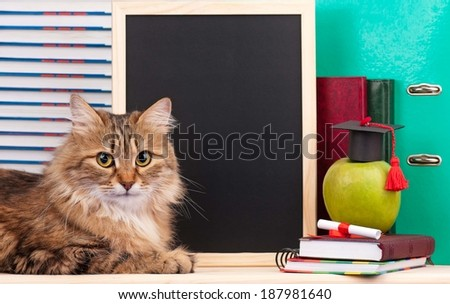 Scientific siberian cat with educational accessories concept - stock photo