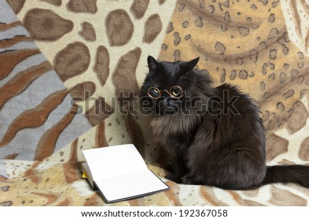 scientist cat with glasses reading a book - stock photo