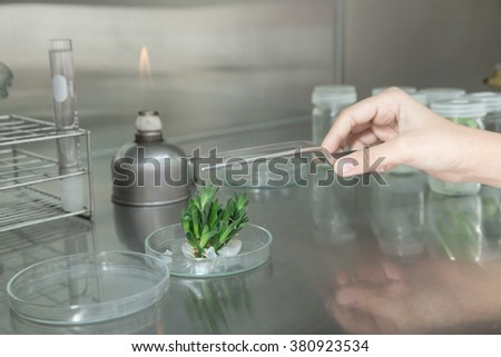 Scientist , examining and plant propagation In the laboratory, sterile