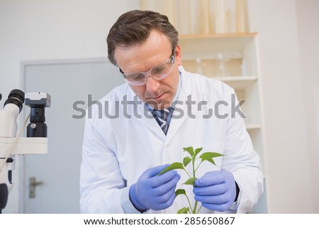 Scientist examining plants in the laboratory