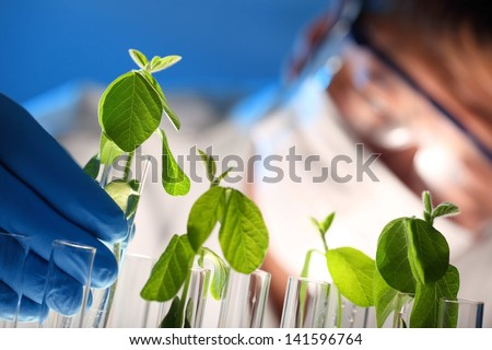 Scientist examining samples with plants,Closeup - stock photo