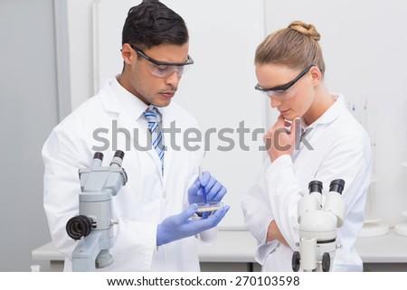 Scientists examining petri dish in the laboratory - stock photo