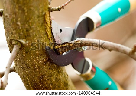Scissors is cutting branches from tree, trimming - stock photo