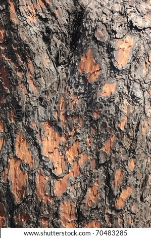 Scorched bark close up, background - stock photo