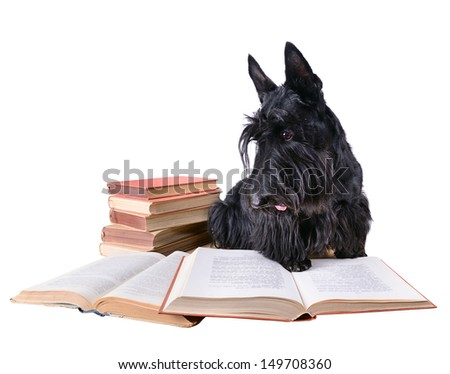 Scotch terrier with books on a white background - stock photo