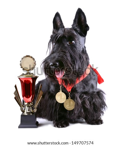 Scotch terrier with two gold medals and cup on a white background - stock photo