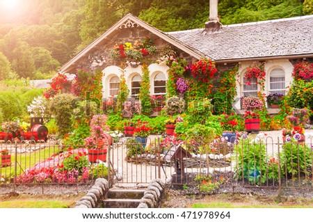 house flowers flower village park dubai stock photo 257223811