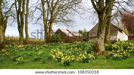 Scottish Field and Barns - stock photo