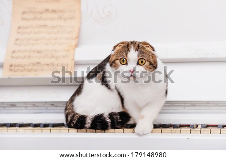 Scottish fold cat sits on the piano - stock photo