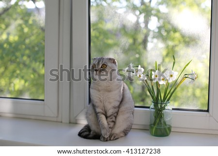 Scottish Fold cat sitting next to flowers on the windowsill. Selective focus